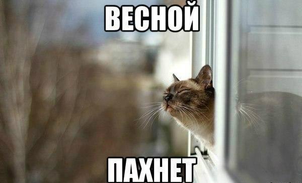 """Картинки по запросу """"весна гиф юмор"""""""