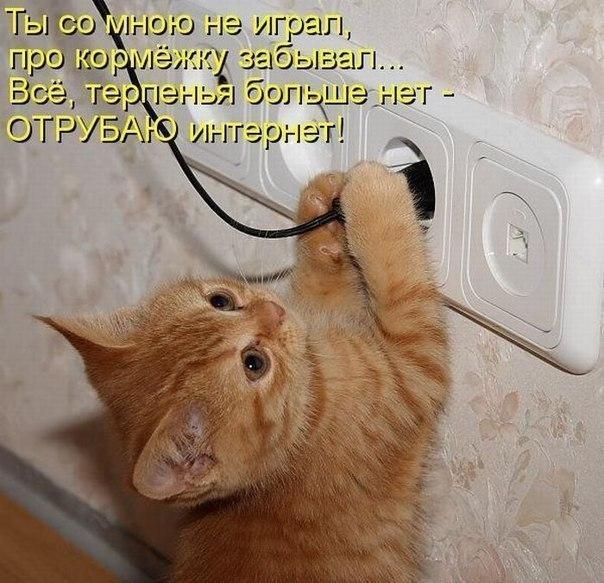 Фото приколы котенок - Лучшие фото приколы
