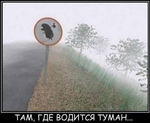 картинки с надписями ежик в тумане